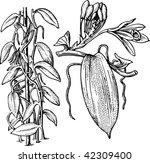 plant | Shutterstock .eps vector #42309400