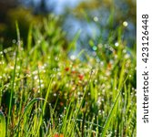 dew drops on the green grass of ... | Shutterstock . vector #423126448