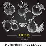 vector citrus fruits set.... | Shutterstock .eps vector #423127732