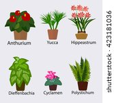 selection of plants for office... | Shutterstock .eps vector #423181036