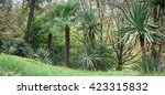 park alley in the botanical... | Shutterstock . vector #423315832