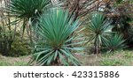 park alley in the botanical... | Shutterstock . vector #423315886