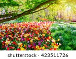spring landscape with... | Shutterstock . vector #423511726