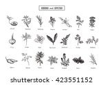 set of herbs and spices in... | Shutterstock .eps vector #423551152