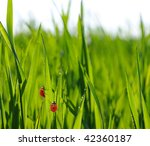 beautiful green lawn | Shutterstock . vector #42360187