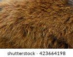 Close View Of Red Panda Fur Or...