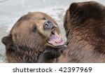 Alaskan brown bear in water - stock photo