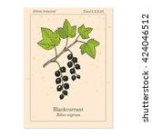blackcurrant  ribes nigrum .... | Shutterstock .eps vector #424046512