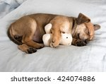 Stock photo one month old terrier mix puppy sleeping in bed with favorite toy 424074886