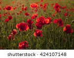 Poppy Field In Full Bloom...