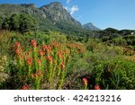 kirstenbosch botanical gardens... | Shutterstock . vector #424213216