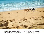 Stock photo picture of dogs chasing each other on the ocean sandy beach at sunset outdoors background 424228795