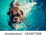 Stock photo boxer dog swimming 424307308