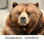 Alaskan brown bear (grizzly) portrait - stock photo