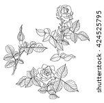 black line draw roses flowers... | Shutterstock . vector #424525795