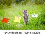Stock photo kitten and notes cute little kitten on the grass lawn kitten walking on the grass in park 424648306