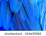 texture of macaw feather | Shutterstock . vector #424659082