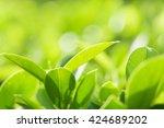 closeup nature view of green... | Shutterstock . vector #424689202