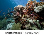 ocean  coral and fish | Shutterstock . vector #42482764