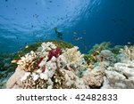 ocean  coral and fish | Shutterstock . vector #42482833