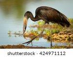 african open billed stork... | Shutterstock . vector #424971112