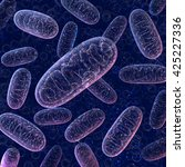 mitochondria on a dark blue... | Shutterstock . vector #425227336