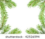 pine tree branch isolated on... | Shutterstock . vector #42526594