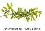 plum tree branch with green... | Shutterstock . vector #425314546