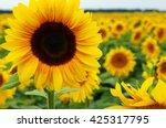 field of sunflowers . close up... | Shutterstock . vector #425317795