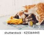 Ginger Cat And Kitten. Mother...