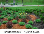 yellow tulips  sedum telephium '... | Shutterstock . vector #425455636
