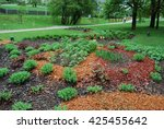 Small photo of Alchemilla erythropoda, Sedum telephium 'Herbstfreude', Hosta sieboldiana, Heuchera on the flowerbed, sprinkler with red dyed mulch. Ornamental plants for landscaping.