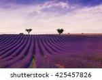beautiful colors purple... | Shutterstock . vector #425457826