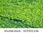 Green Algae In Water  Background