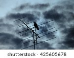 Silhouette Crow On Antenna And...
