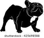 french bulldog isolated on... | Shutterstock .eps vector #425698588