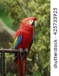 parrot | Shutterstock . vector #425733925