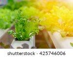 green hydroponic organic salad...   Shutterstock . vector #425746006
