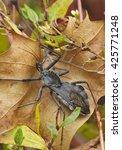 A Wheel Bug Sits On A Leaf...
