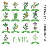 vector illustration of a plant  ... | Shutterstock .eps vector #425796652
