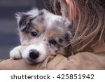 Stock photo girl holding a dog in her arms blue merle border collie puppy 425851942