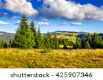 Classic Carpathian Autumn landscape in mountains of Romania. Fresh and green trees of conifer forest on hillsides of Apuseni National Park.  - stock photo