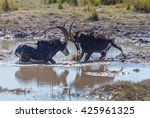 Two Males Sable Antelope ...