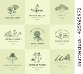vector vintage hand drawn herb... | Shutterstock .eps vector #425965972