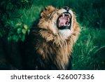 beautiful lions in savannah | Shutterstock . vector #426007336