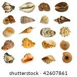 seashell isolated on white... | Shutterstock . vector #42607861