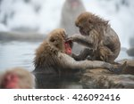 Japanese Macaque Bathing In Ho...