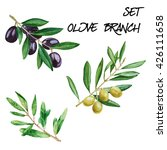 set with olive branches.... | Shutterstock . vector #426111658
