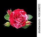 red rose isolated on a black... | Shutterstock . vector #426168052
