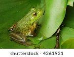 frog profile | Shutterstock . vector #4261921